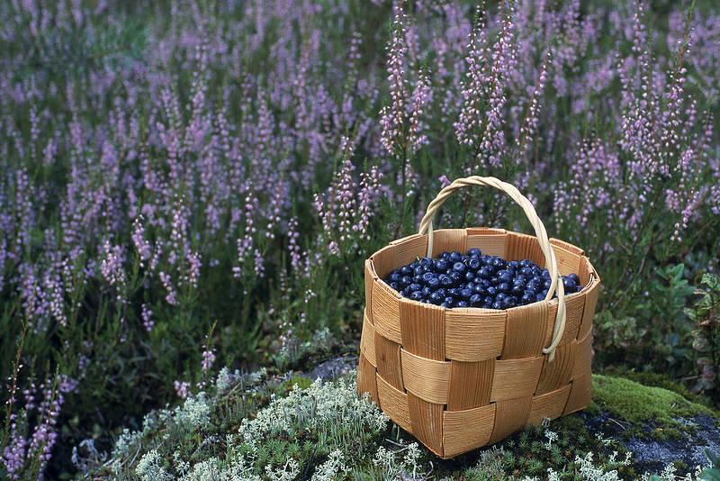 Blueberry basket 179 2