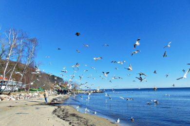 Gdynia Orłowo – plaża