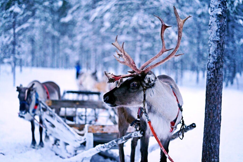 Finlandia zimą