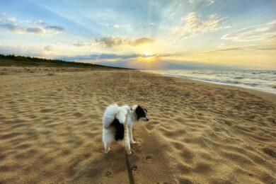Podróże z psem w praktyce